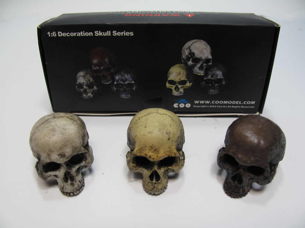 Human Skull 1/6 Scale Set of 3 by Coo Model