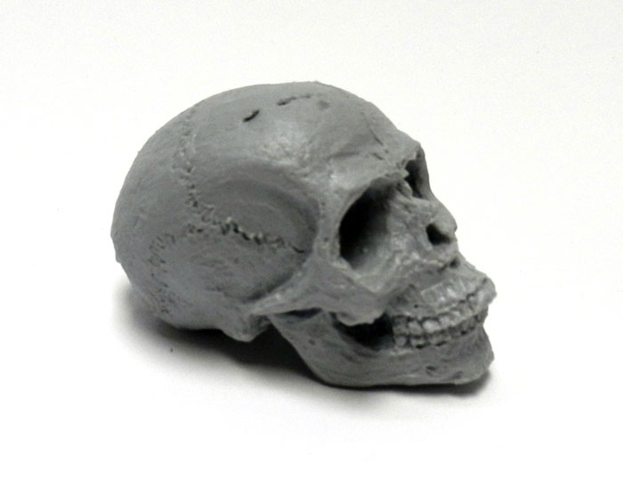 Human Skull 1/4 Scale 2.5 Inch Model Kit for Customizing