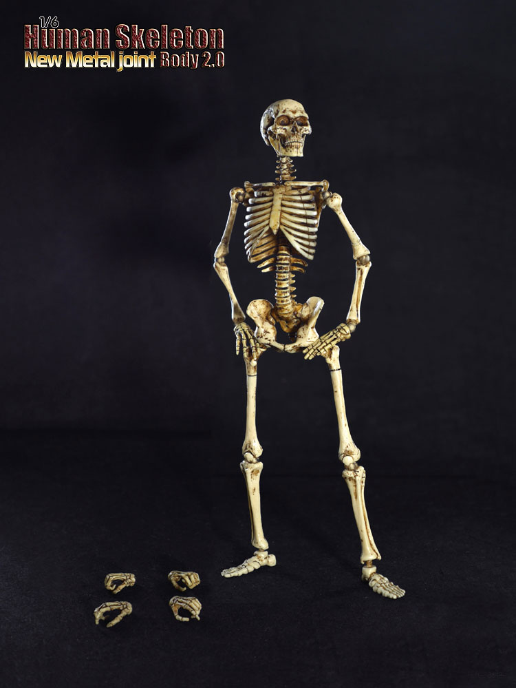 Skeleton Body Movable 1/6 Scale Figure 2.0 with Metal Joints