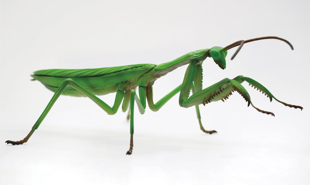 Giant Praying Mantis Japanese Model Kit by Fujima