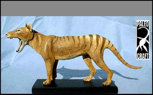 Thylacine Prehistoric Mammal Model Kit by Paleocraft - Click Image to Close