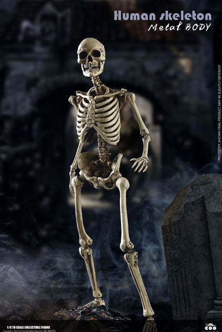 Human Skeleton 1//6 Scale Diecast Metal Body by Coo 161CO13